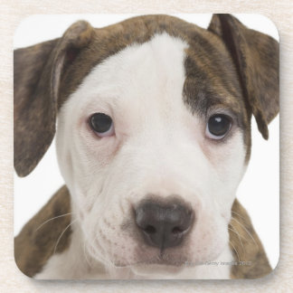 Portrait of a pitbull puppy drink coasters