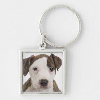 Portrait of a pitbull puppy keychain