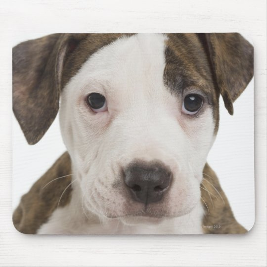 Portrait of a pitbull puppy mouse pad