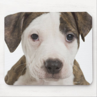 Portrait of a pitbull puppy mouse pads