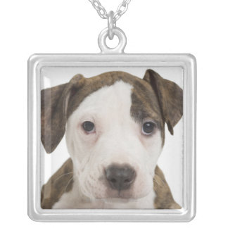 Portrait of a pitbull puppy jewelry