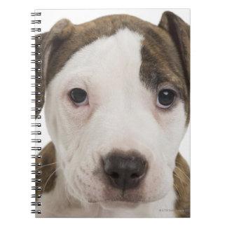 Portrait of a pitbull puppy spiral note book