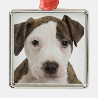Portrait of a pitbull puppy christmas tree ornament