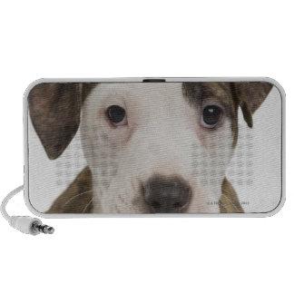 Portrait of a pitbull puppy iPod speakers