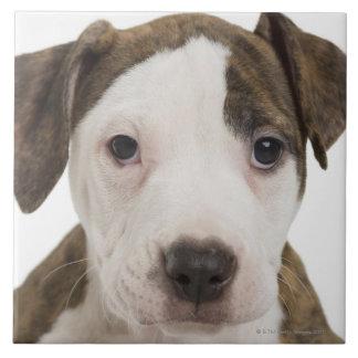 Portrait of a pitbull puppy ceramic tiles