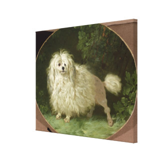 Portrait of a Poodle Gallery Wrapped Canvas