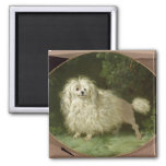 Portrait of a Poodle Magnets