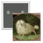 Portrait of a Poodle Pinback Buttons