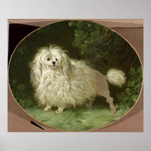 Portrait of a Poodle Poster