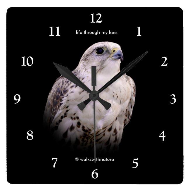 Portrait of a Saker Falcon