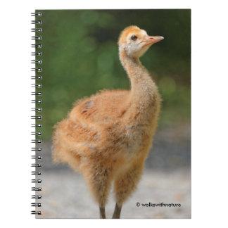 Portrait of a Sandhill Crane Colt Notebook