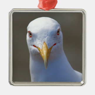 portrait of a seagull metal ornament