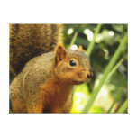 Portrait of a Squirrel Nature Animal Photography Canvas Print