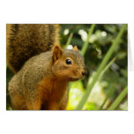 Portrait of a Squirrel Nature Animal Photography Card