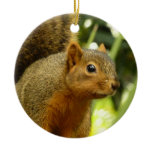 Portrait of a Squirrel Nature Animal Photography Ceramic Ornament
