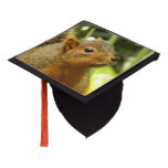 Portrait of a Squirrel Nature Animal Photography Graduation Cap Topper