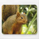 Portrait of a Squirrel Nature Animal Photography Mouse Pad