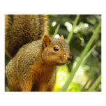 Portrait of a Squirrel Nature Animal Photography Photo Print