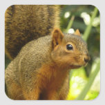 Portrait of a Squirrel Nature Animal Photography Square Sticker