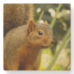 Portrait of a Squirrel Nature Animal Photography Stone Coaster