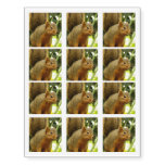 Portrait of a Squirrel Nature Animal Photography Temporary Tattoos