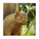 Portrait of a Squirrel Nature Animal Photography Tile