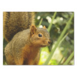 Portrait of a Squirrel Nature Animal Photography Tissue Paper