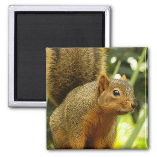 Portrait of a Squirrel Refrigerator Magnet