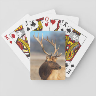 Portrait of a stunning bull elk playing cards