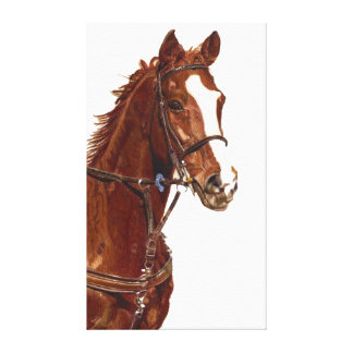 Portrait of a Thoroughbred Stretched Canvas Print