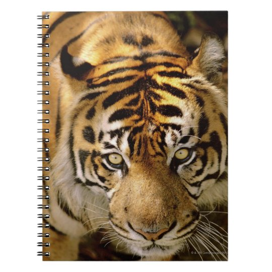 Portrait of a tiger notebook