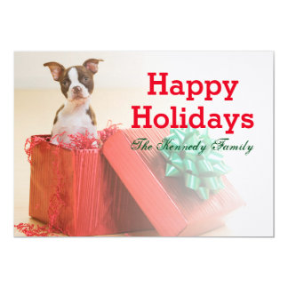 Portrait of a white and brown Boston Terrier Card