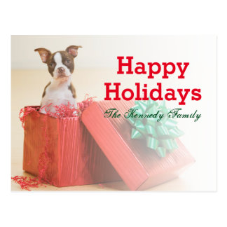 Portrait of a white and brown Boston Terrier Postcard