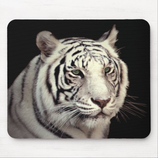 Portrait of a White Bengal Tiger Mouse Pad