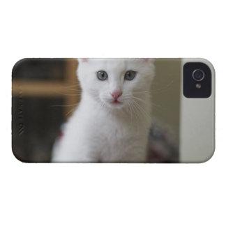 Portrait of a white kitten, Sweden. Case-Mate iPhone 4 Case