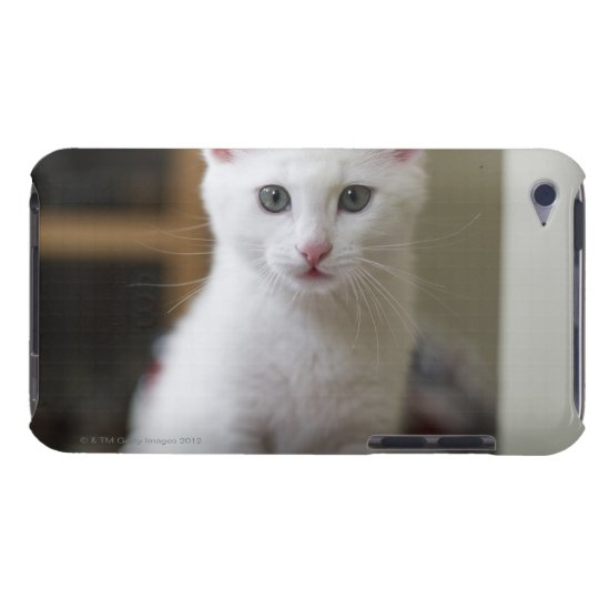 Portrait of a white kitten, Sweden. Case-Mate iPod Touch Case