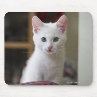 Portrait of a white kitten, Sweden. Mouse Pad