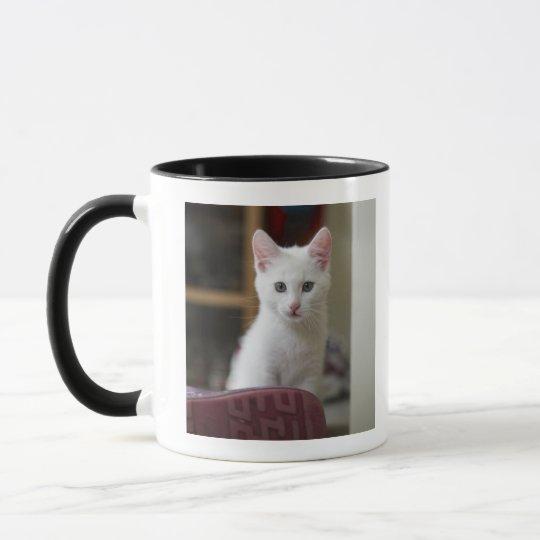 Portrait of a white kitten, Sweden. Mug