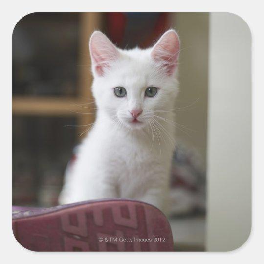 Portrait of a white kitten, Sweden. Square Sticker
