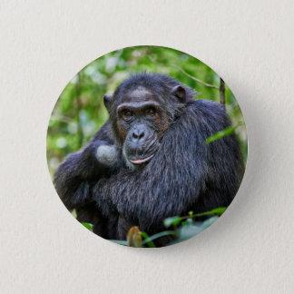 Portrait of a wild chimpanzee pinback button