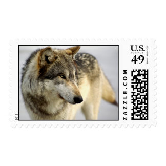Portrait of A Wolf Postage