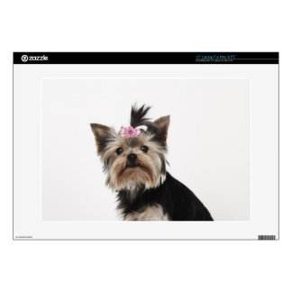 "Portrait of a Yorkshire Terrier dog 15"" Laptop Skin"