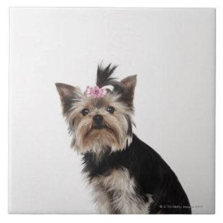 Portrait of a Yorkshire Terrier dog Ceramic Tile