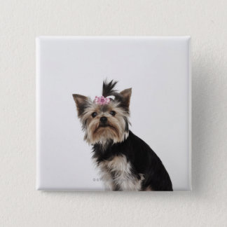 Portrait of a Yorkshire Terrier dog Pinback Button
