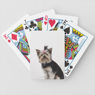 Portrait of a Yorkshire Terrier dog Bicycle Poker Deck