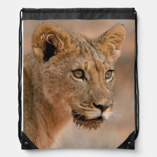 Portrait Of A Young Male Lion (Panthera Leo) Drawstring Backpack