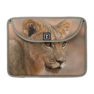 Portrait Of A Young Male Lion (Panthera Leo) Sleeves For MacBooks