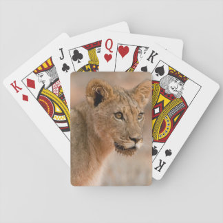 Portrait Of A Young Male Lion (Panthera Leo) Poker Deck