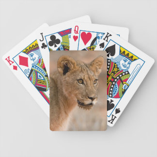 Portrait Of A Young Male Lion (Panthera Leo) Poker Cards