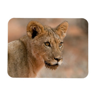 Portrait Of A Young Male Lion (Panthera Leo) Rectangular Photo Magnet